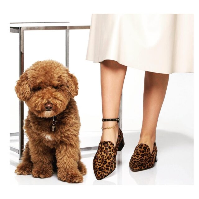 Find the cutest !  Our NEW NARCISSUS Leather Anklet with PVD  gold chain styled perfectly with ARTEMIS Loafers and ... Choco !🐆   You can find them all ( Choco excluded) in www.raniakroupi.com with an express delivery or contact us .  #Narcissusanklet inspired by mythological #narcissus  #handmadeinAthens in #atelieraniakroupi  An #avant-garde #accessory originally designed and made by #RANIAKROUPI #raniakroupishoes  Feel like NARCISSUS