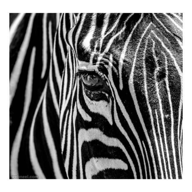 """They 're called zebras"", I said. ""What happens when it rains?"" ""Nothing"" ""The stripes don't melt?"" ""No"".  Life of Pi  #zebra #lifeofpi  #raniakroupishoes  #zebra_bar_athens #zebra_bar"